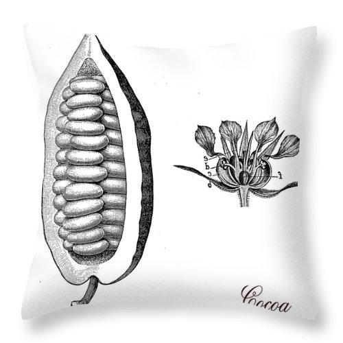 Cocoa Bean Throw Pillow featuring the digital art Cocoa Bean, Botanical Vintage Engraving by Luisa Vallon Fumi