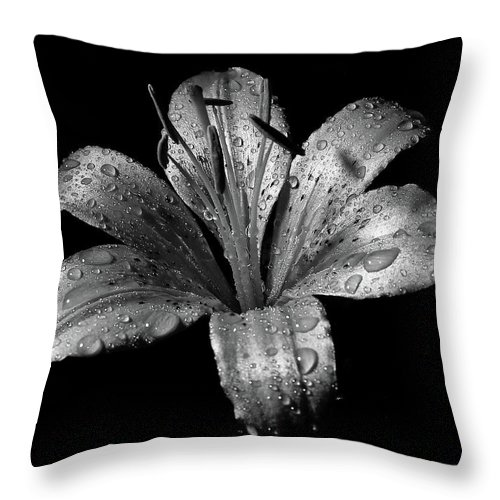 Black Background Throw Pillow featuring the photograph Collection by Photograph By Ryan Brady-toomey