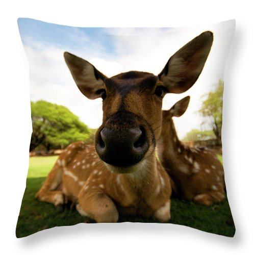 Mountain Pass Throw Pillow featuring the photograph Colseup Of A Dear by Ian Payne