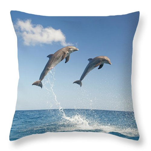 Aerodynamic Throw Pillow featuring the photograph Common Bottlenose Dolphins Tursiops by Mike Hill