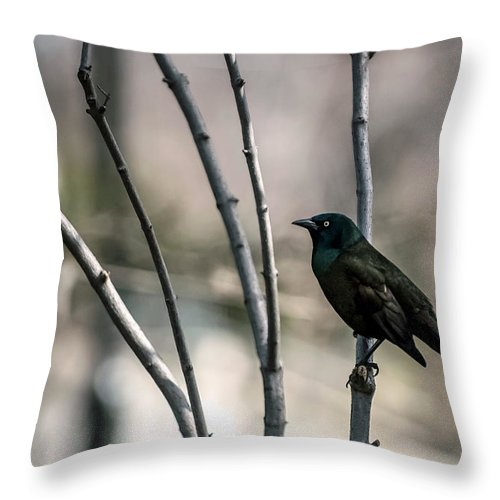 Animal Themes Throw Pillow featuring the photograph Common Grackle by By Ken Ilio