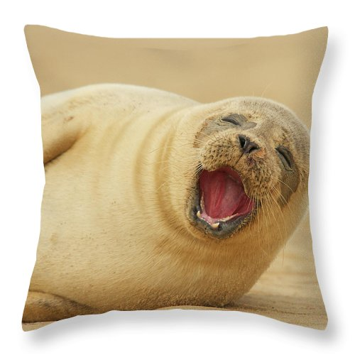 Animal Themes Throw Pillow featuring the photograph Common Seal by Copyright Alex Berryman