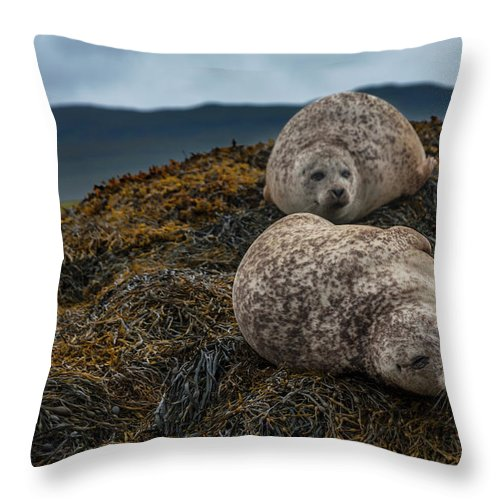 Seaweed Throw Pillow featuring the photograph Common Seals, Loch Dunvegan, Isle Of by Diane Macdonald