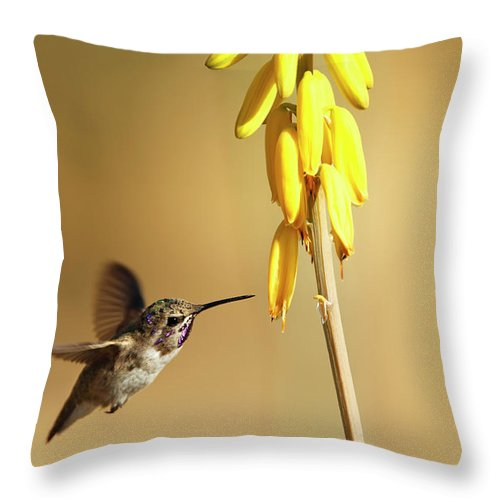 Animal Themes Throw Pillow featuring the photograph Costas Hummingbird At Yellow Desert by Susangaryphotography