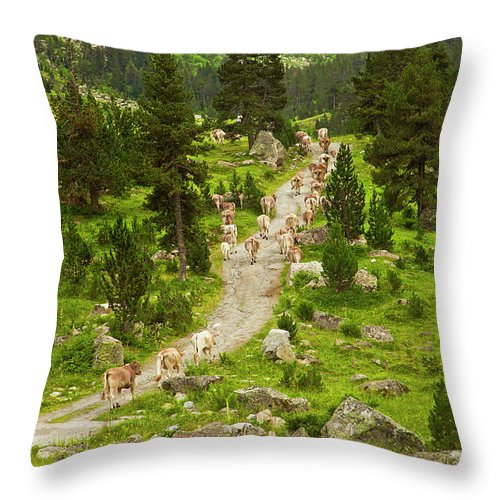 Catalonia Throw Pillow featuring the photograph Cows Walking In Catalan Pyrenees by Gonzalo Azumendi
