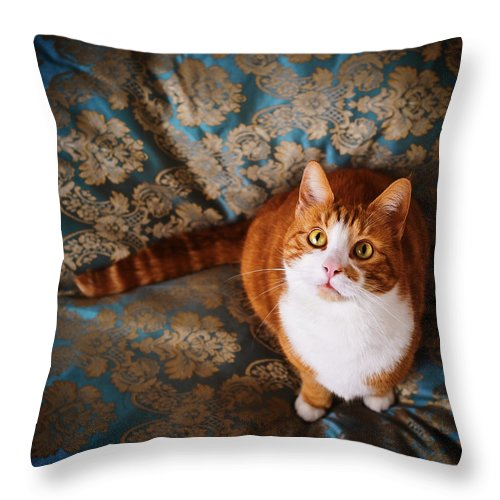 Pets Throw Pillow featuring the photograph Cute Cat Named Nisse by Knape