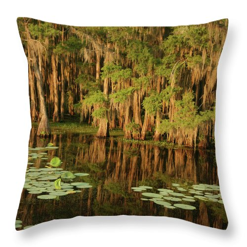 Outdoors Throw Pillow featuring the photograph Cypress In The Lake by Jlfcapture