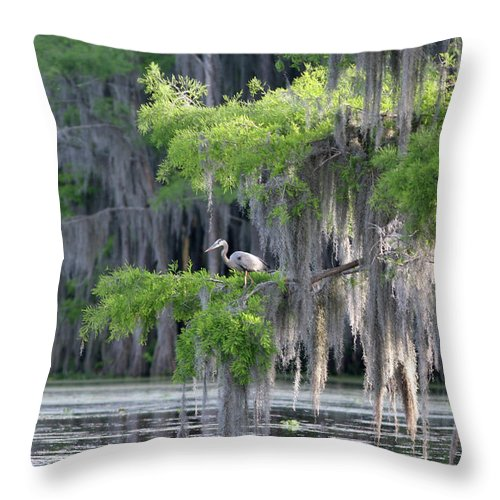 Scenics Throw Pillow featuring the photograph Cypress Swamp With Great Blue Heron by Jlfcapture