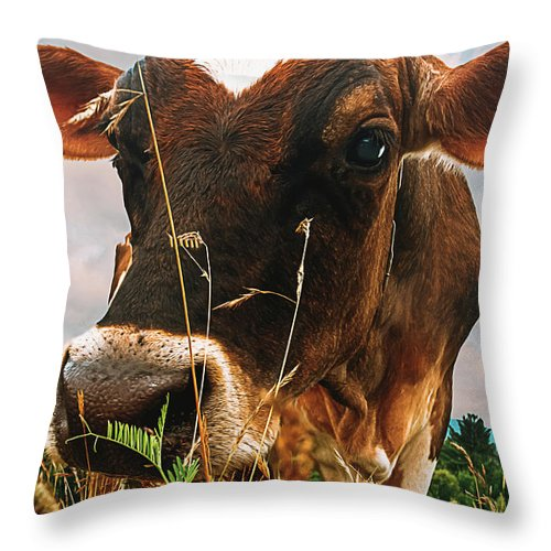 Cow Throw Pillow featuring the photograph Dairy Cow by Bob Orsillo