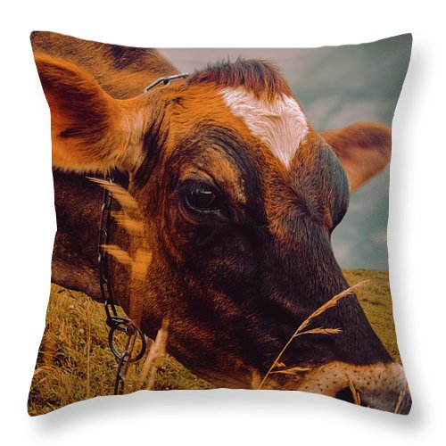 Cow Throw Pillow featuring the photograph Dairy Cow Eating Grass by Bob Orsillo
