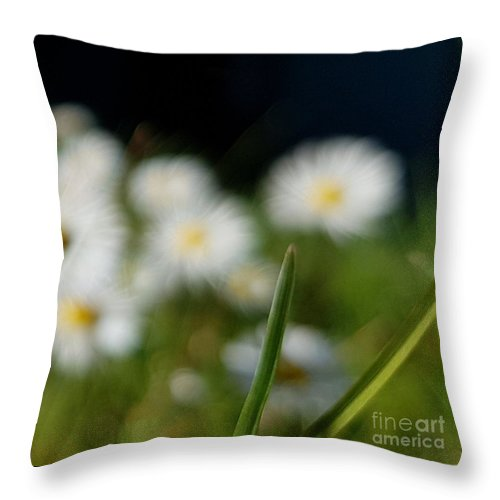 Throw Pillow featuring the photograph Daisy Landscape by Paola Baroni
