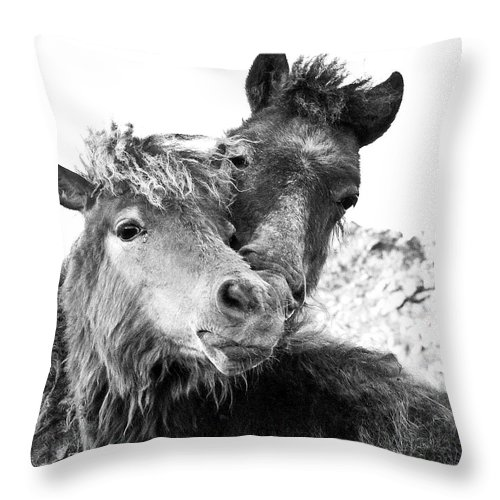 Working Animal Throw Pillow featuring the photograph Dartmoor Ponies by Adam Hirons Photography