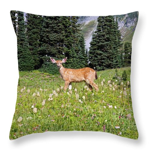 Alertness Throw Pillow featuring the photograph Deer Cervidae In Paradise Park In Mt by Design Pics / Craig Tuttle