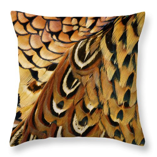 Orange Color Throw Pillow featuring the photograph Detail Of Pheasant Feathers by Jeffrey Coolidge