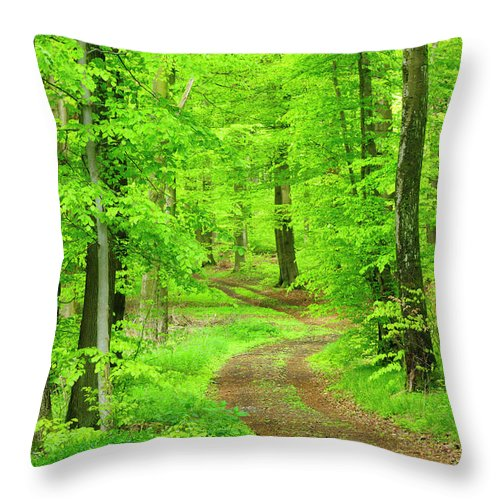Environmental Conservation Throw Pillow featuring the photograph Dirt Road Through Lush Beech Tree by Avtg
