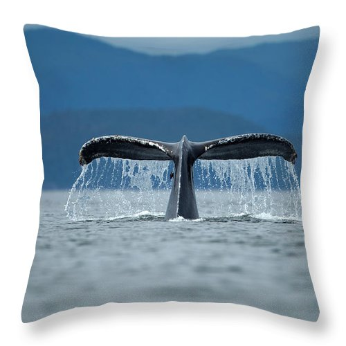 Diving Into Water Throw Pillow featuring the photograph Diving Humpback Whale, Alaska by Paul Souders