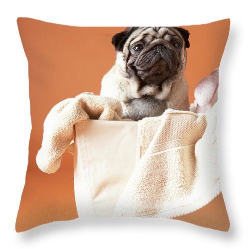 Pets Throw Pillow featuring the photograph Dog In Basket by Chris Amaral