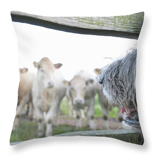 Alertness Throw Pillow featuring the photograph Dog Watching Cows Through Fence by Cecilia Cartner