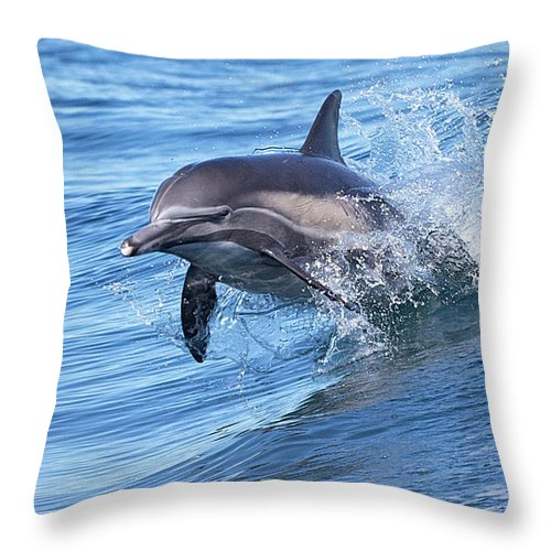 Wake Throw Pillow featuring the photograph Dolphin Riding Wake by Greg Boreham (treklightly)