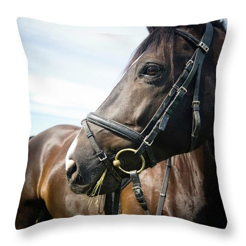 Horse Throw Pillow featuring the photograph Dont Look Back by Pixalot