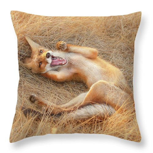 Fox Throw Pillow featuring the photograph Draw Me Like One Of Your French Girls - Funny Fox by Roeselien Raimond