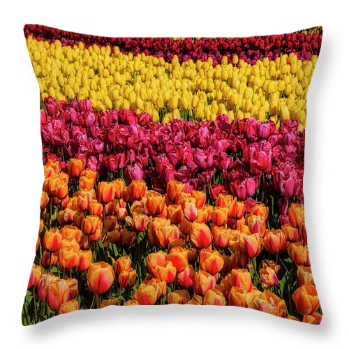 Tulip Throw Pillow featuring the photograph Dreaming Of Endless Colorful Tulips by Garry Gay