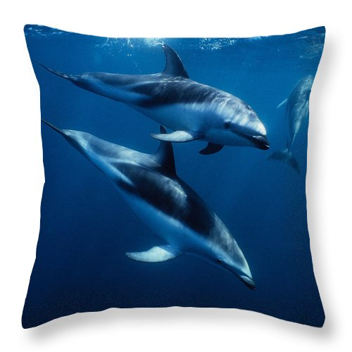 Underwater Throw Pillow featuring the photograph Dusky Dolphin, Lagenorhynchus Obscurus by Gerard Soury