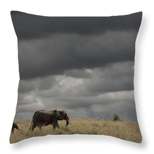 Kenya Throw Pillow featuring the photograph Elephant Under Cloudy Sky by Buena Vista Images