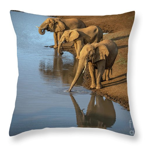 African Elephant Throw Pillow featuring the photograph Elephants Drinking From A Water Hole. by Jamie Pham