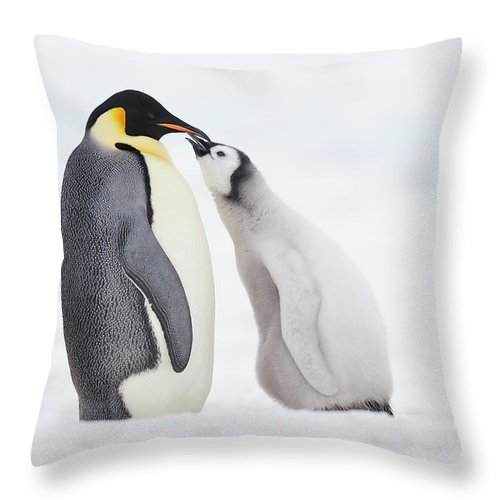 Emperor Penguin Chick And Adult Throw Pillow For Sale By Martin Ruegner