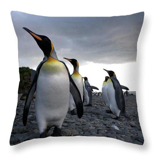 Emperor Penguin Throw Pillow For Sale By Simon Bottomley
