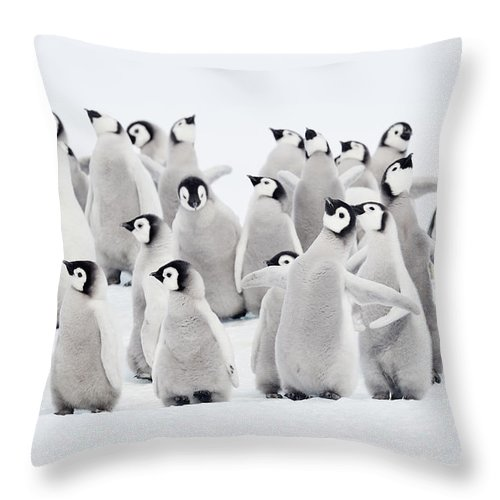 Emperor Penguins Group Of Chicks Throw Pillow For Sale By Martin Ruegner