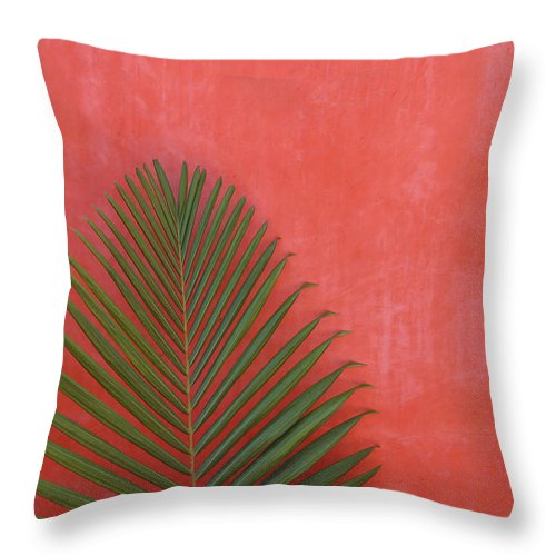 Recreational Pursuit Throw Pillow featuring the photograph Exotic Background by Lucgillet