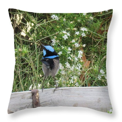 Bird Throw Pillow featuring the photograph Fairy-wren 3 by Joan Stratton