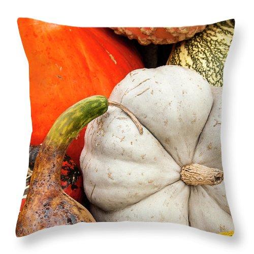 Season Throw Pillow featuring the photograph Fall Season Squash And Pumpkins by M Timothy O'keefe