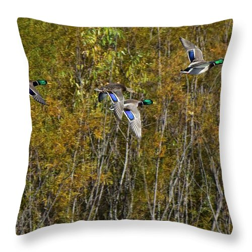 Ducks Throw Pillow featuring the photograph Fall Time Mallards by Dwight Eddington