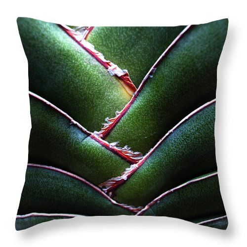 Natural Pattern Throw Pillow featuring the photograph Fan Leave Succulent Plant by Tontygammy + Images