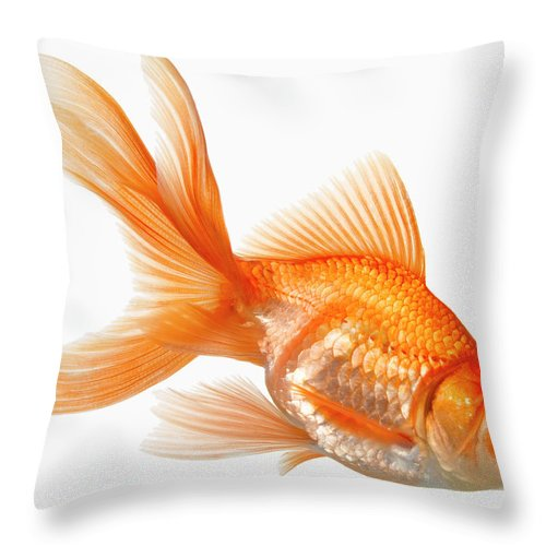Orange Color Throw Pillow featuring the photograph Fancy Goldfish by Don Farrall