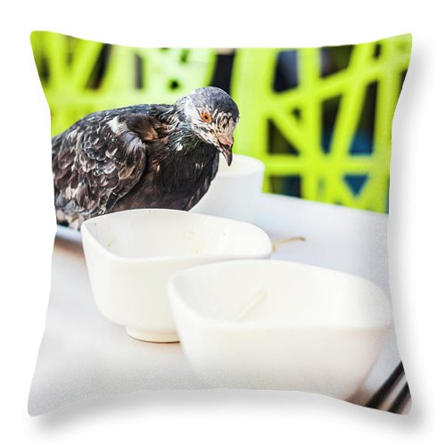 Bird Throw Pillow featuring the photograph Fast Food Asian Pigeon by Jorgo Photography - Wall Art Gallery