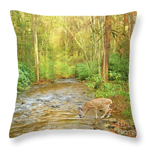 Deer Throw Pillow featuring the photograph Fawn Drinking From Stream by Laura D Young