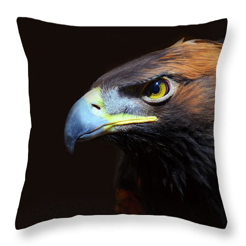 Animal Themes Throw Pillow featuring the photograph Female Golden Eagle by A L Christensen