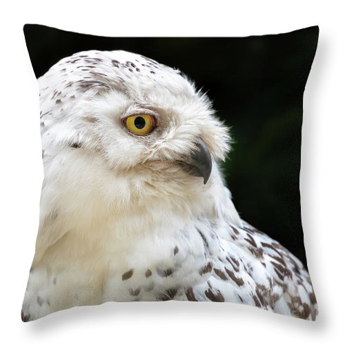 White Throw Pillow featuring the photograph Female Snowy Owl Close Up by Jane Rix