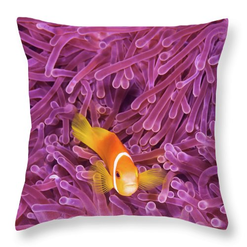 Underwater Throw Pillow featuring the photograph Fish by Extreme-photographer
