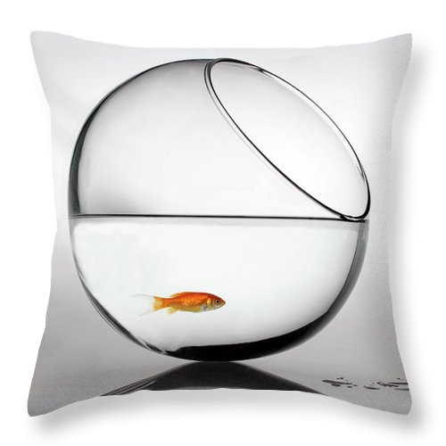 White Background Throw Pillow featuring the photograph Fish In Fish Bowl Stressed In Danger by Paul Strowger
