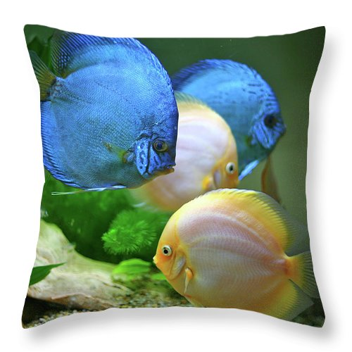 Underwater Throw Pillow featuring the photograph Fish In Water by Vietnam