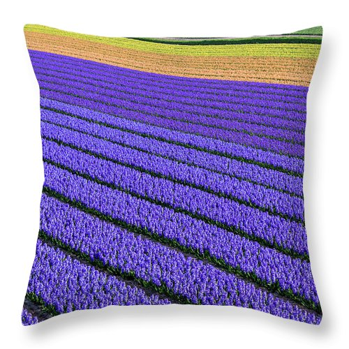 Tranquility Throw Pillow featuring the photograph Flower Fields In Spring In Holland by Frans Sellies