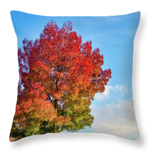 Autumn Throw Pillow featuring the photograph Foliage In Flanders by Fabrizio Troiani