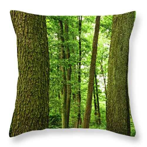 Scenics Throw Pillow featuring the photograph Footpath Between The Trees by Tomchat