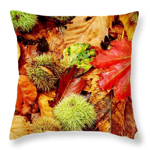 Tranquility Throw Pillow featuring the photograph Forest Floor by Andrew Turner