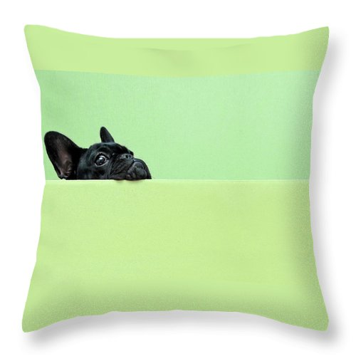 Pets Throw Pillow featuring the photograph French Bulldog Puppy by Retales Botijero